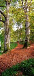 Cawdor Big Wood
