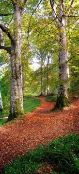 Cawdor Big Wood